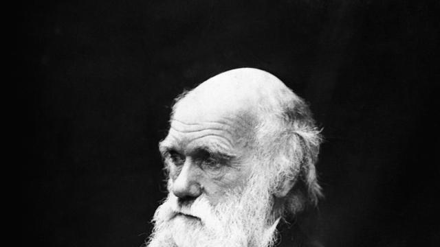 Turkije wil evolutieleer Darwin uit schoolboeken schrappen