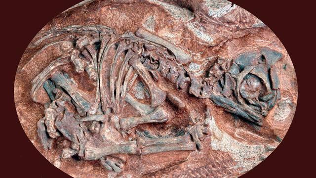 Oudste dinosaurusnesten gevonden