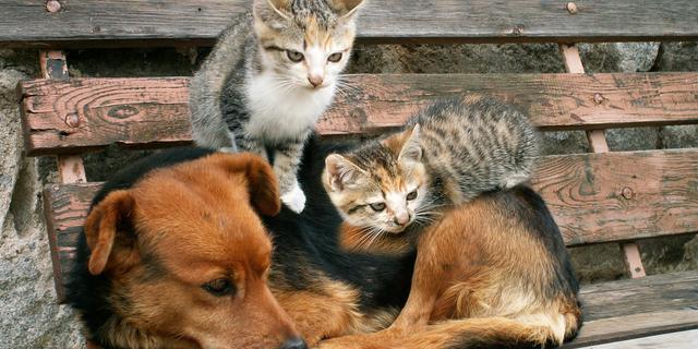 Max en Pip populairste namen voor hond en kat