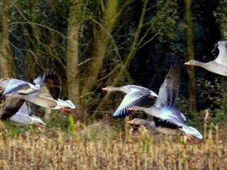Dieren gaan bij zwaar weer snel naar de grond