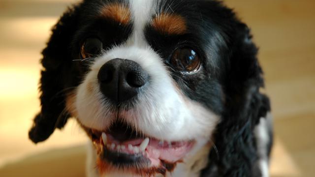 Hond in VS zet fornuis aan en veroorzaakt brandje