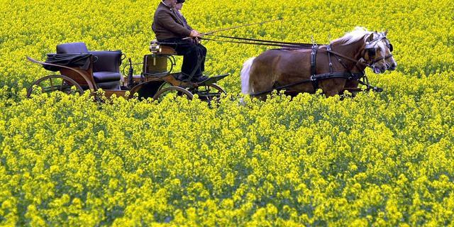 Spaanse gemeente bezuinigt met paard en wagen