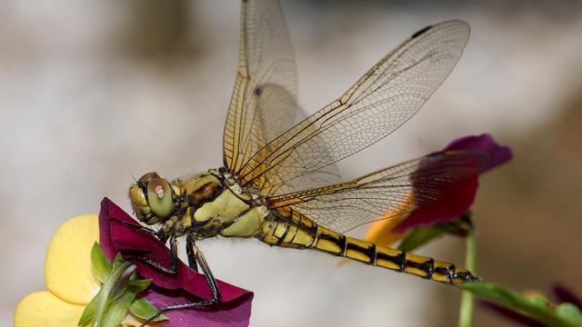 Insecten kunnen sterven door doodsangst