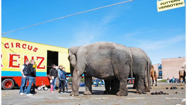 Circussen VS wellicht zonder olifanten