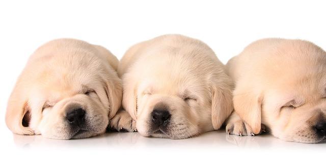 Alle puppy's chippen vanaf 2012