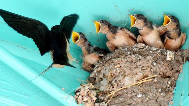 Vogel bouwt nest niet instinctief