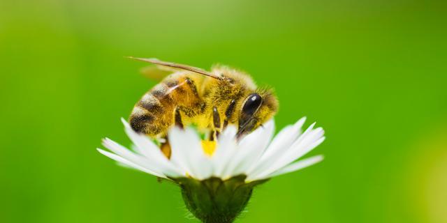 Groene Vinger in Kerk & Zanen wordt bijenparadijs