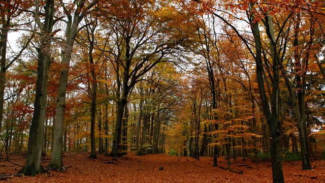 'Duits gezin woonde niet in Twents bos'