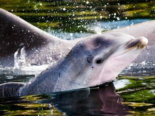 Zeedierenpark is sinds 2001 in handen van Franse onderneming Compagnie des Alpes