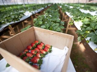 Brussel gaat ook producenten van perziken en nectarines helpen