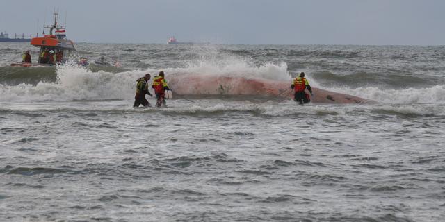 Dode walvis wordt op Schevenings strand ontleed