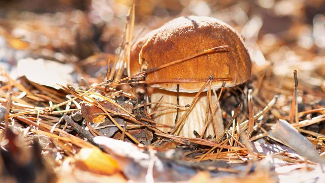 Relatief weinig eekhoorntjesbrood ondanks zomerse buien