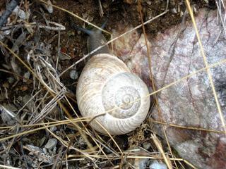 Resten van slakkenhuizen gevonden in Spaanse grot