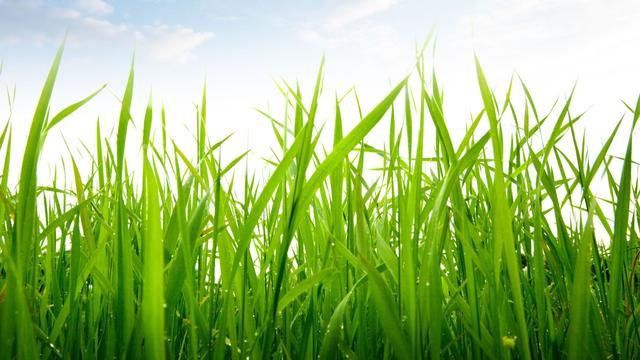 Grasbetonstenen bij Sportpark de Beek