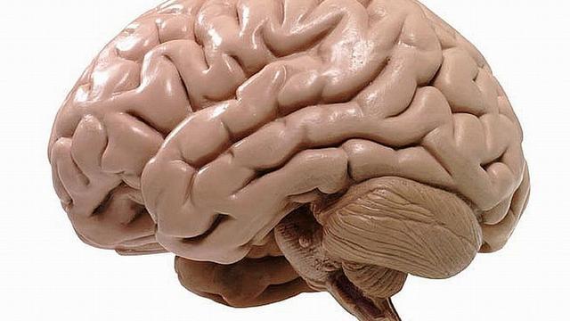 Genen ontdekt die menselijk brein relatief groot maken