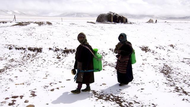 Eerste wolharige neushoorns kwamen uit Tibet