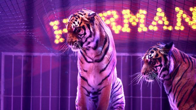 Dijksma wil verbod op wilde dieren in circus