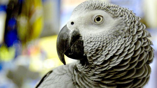 Brandweermannen doorzoeken huis na hulpkreten papegaaien