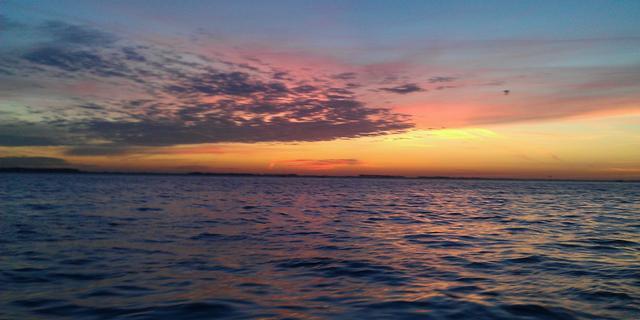 Butskoppen gezien in Oosterschelde, SOS Dolfijn op zoek naar waarnemingen