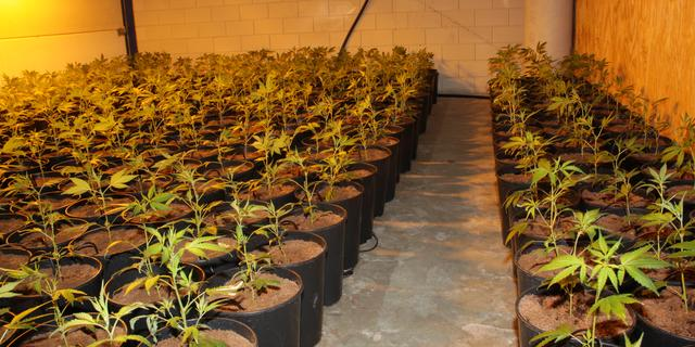 Hennepplantage en ammunitie ontdekt in growshop Garden Team