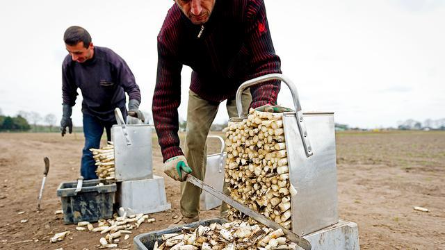 'Uitzendbureaus gebruiken schijnconstructie met Poolse arbeiders'