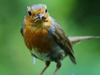 Vogels navigeren op aardmagnetisch veld