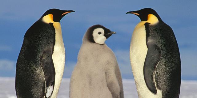 Mogelijk grote hoeveelheden methaan onder Antarctica