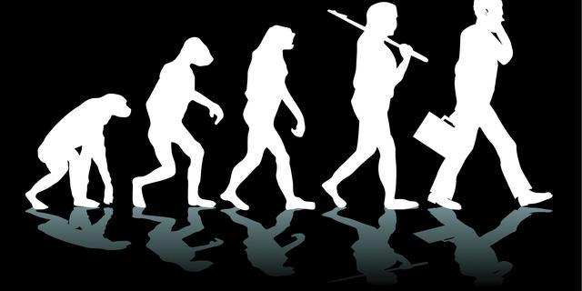 Omvang hersenen meestal geen drijvende kracht evolutie