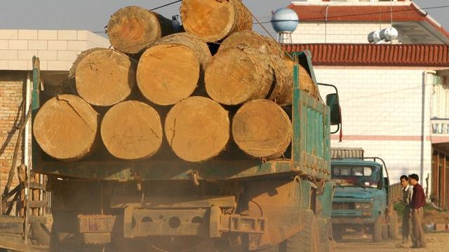 'Natuurbescherming voorkomt ontbossing niet'
