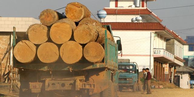 'Meer CO2-uitstoot door houtkap'