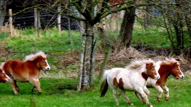 Opnieuw twee aanhoudingen ponymishandeling