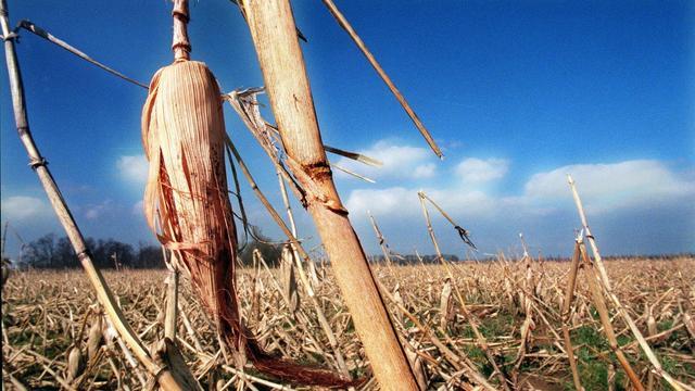 Dieven stelen 80 ton maïskolven in Slowakije