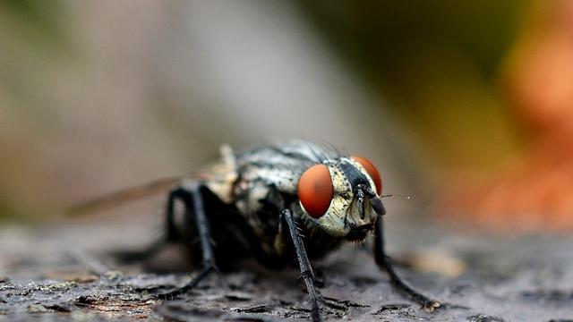Vlieg maakt rechtsomkeert bij stank