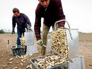 Tuinbouwers kunnen zeker tot november oogst van de markt halen