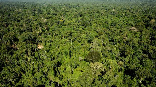 'Amazone wordt bevrucht door stof van visfossielen'