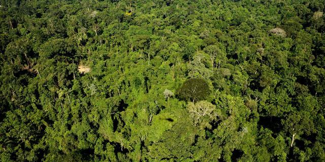 'CO2-opname van Amazonegebied gaat achteruit'