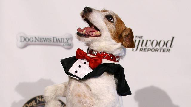 The Artist-hond Uggie zet poot in Walk of Fame