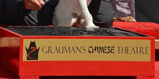 The Artist-hond Uggie vereeuwigd op Walk of Fame