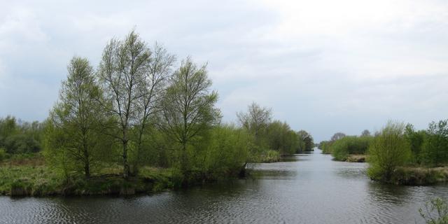 Meeste Nederlanders wonen dicht bij groen
