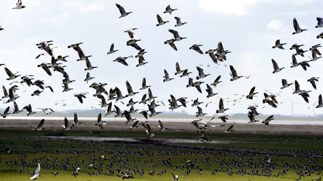 Aangifte tegen ganzenmoord in Noord-Holland