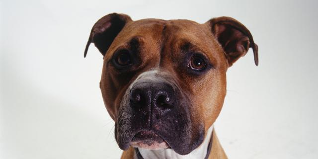 'Honden sympathieker dan mensen'