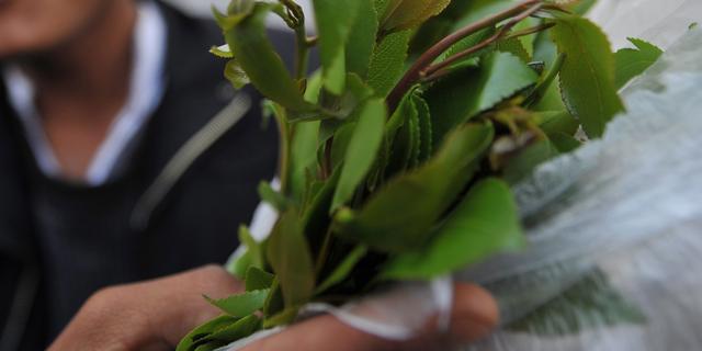 Nederlandse qatsmokkelaar opgepakt in Duitsland