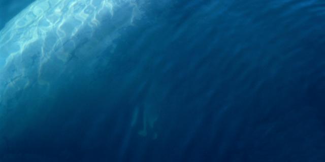 Vinvissen hebben elastieken zenuwen in hun mond