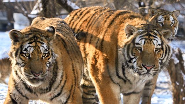 Wetenschappers maken lijst bedreigde dieren