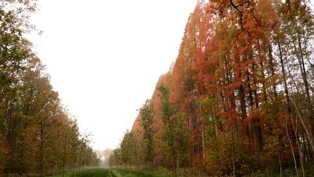 Stedelijke hitte-eilanden zorgen voor snellere groei bomen