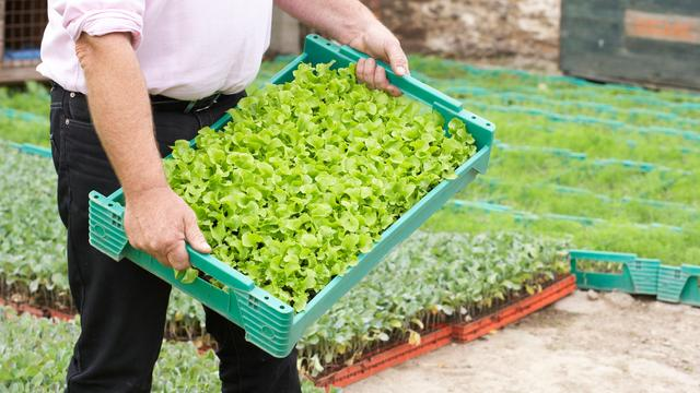 'Genen uit wilde gewassen goed voor biogroenten'