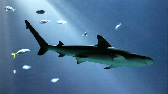 Robin van Persie vangt een haai tijdens vissen