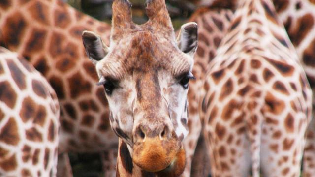 'Verboden staatssteun aan dierenpark Emmen'