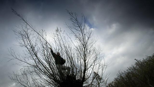 Appelspintkever vreet vogelkers op