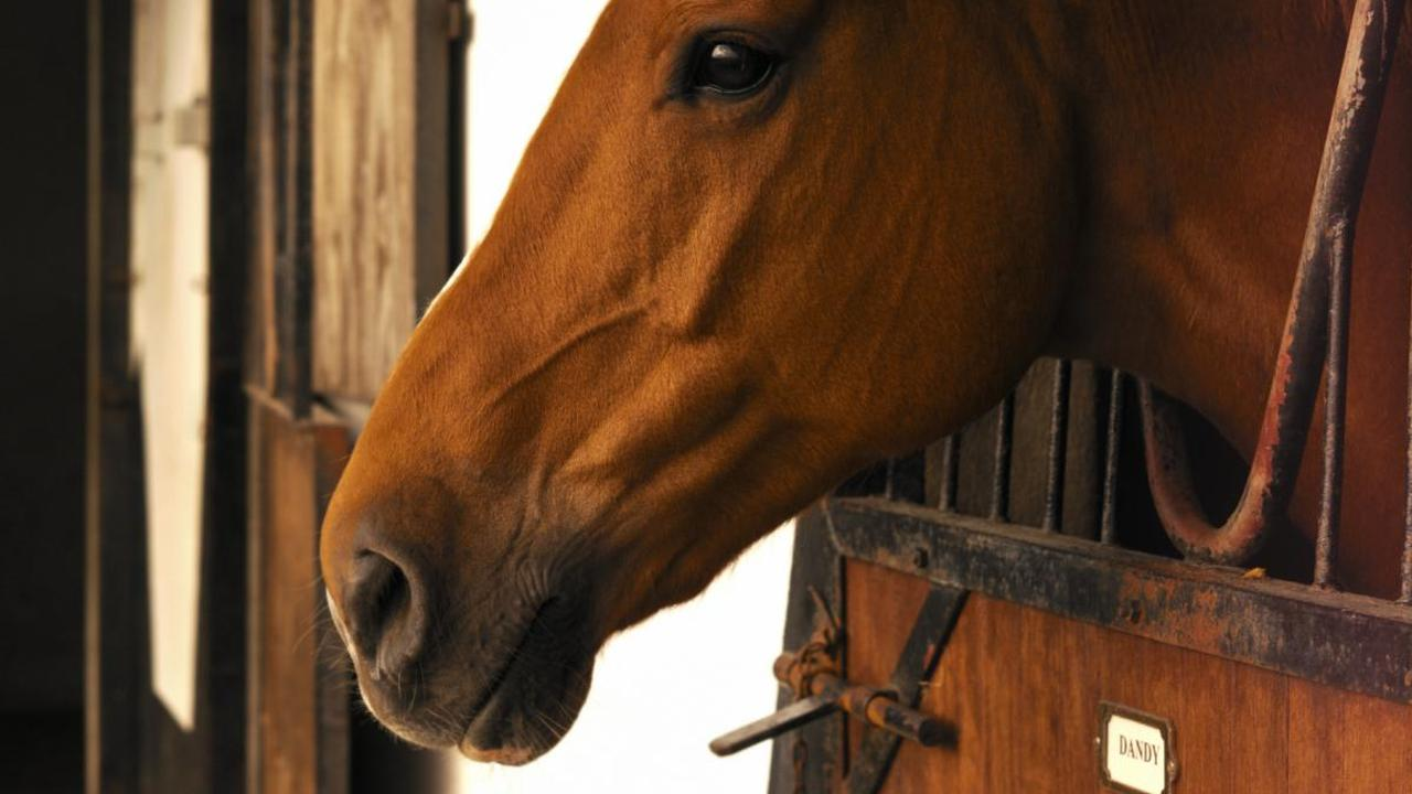'Paard in de gang van crematorium Uden zorgt voor verbazing'